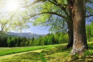 beautiful-landscape-les